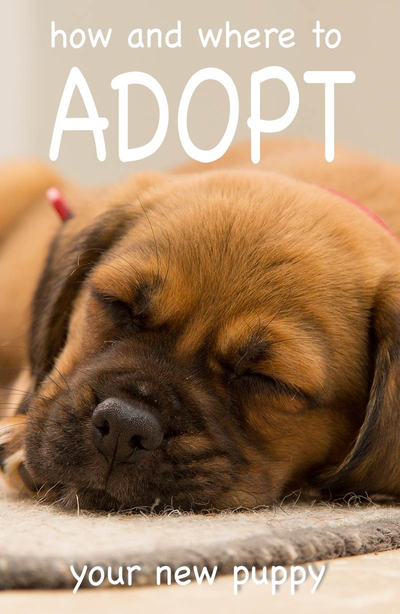 How to adopt a puppy from a shelter - what to do and where to begin