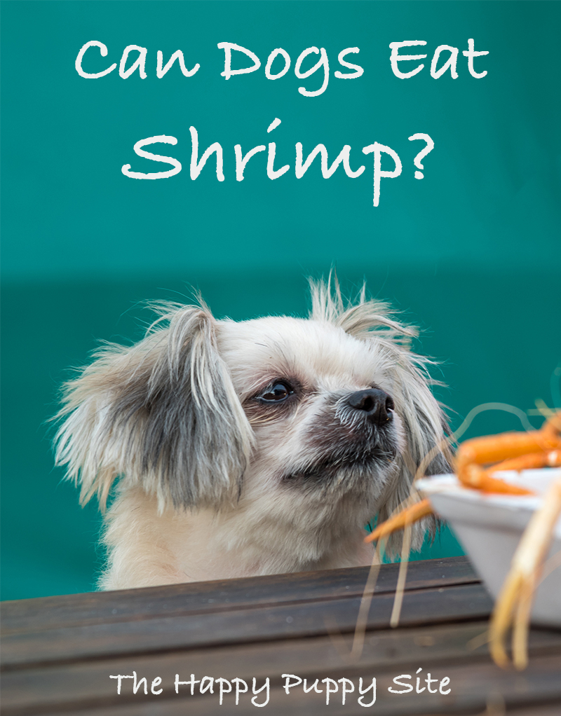 Can dogs eat shrimp - is it safe - find out in this healthy eating guide
