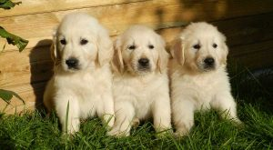 150 Female Dog Names  – Great Names For Girl Puppies