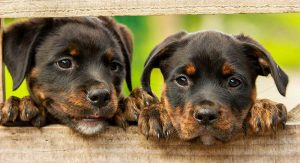 Positive Puppy Training – Does It Really Work?