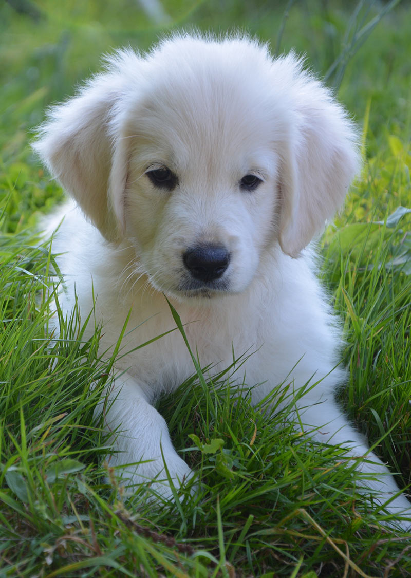 Find out if positive puppy training really works, and what's involved