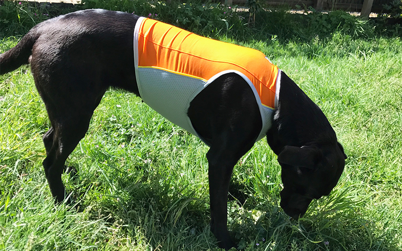 Ruffwear cooling vest review - ruffwear jet stream cooling vest