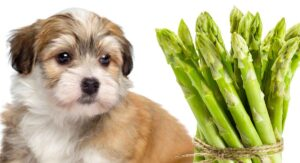 can dogs eat asparagus