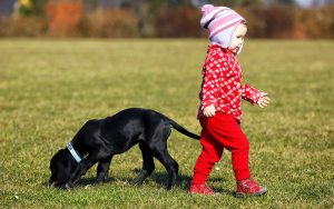 Good Family Dogs – The Right Breed For You