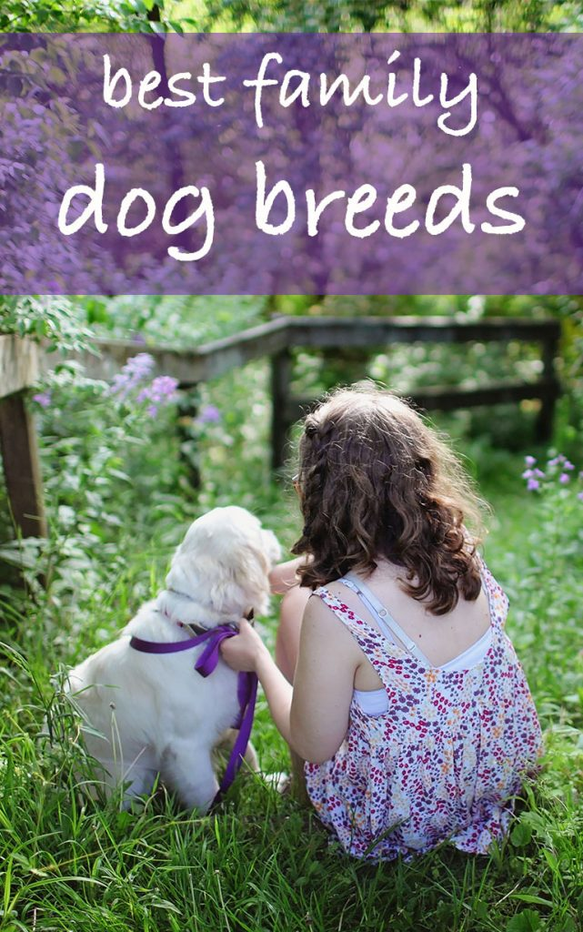Good Family Dogs - Picking The Best Breed For You