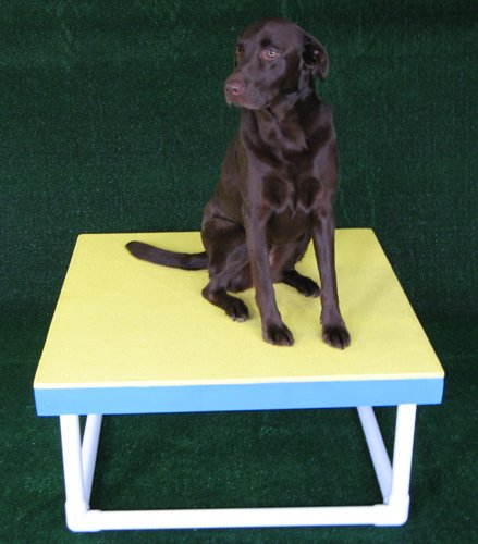 Dog agility pause table