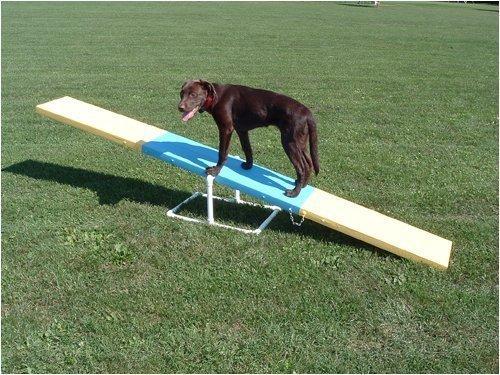 dog agility seesaw