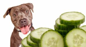 Can Dogs Eat Cucumbers? A Complete Guide To Cucumber For Dogs