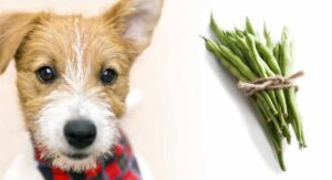 Can Dogs Eat Green Beans? A Guide to Green Beans for Dogs