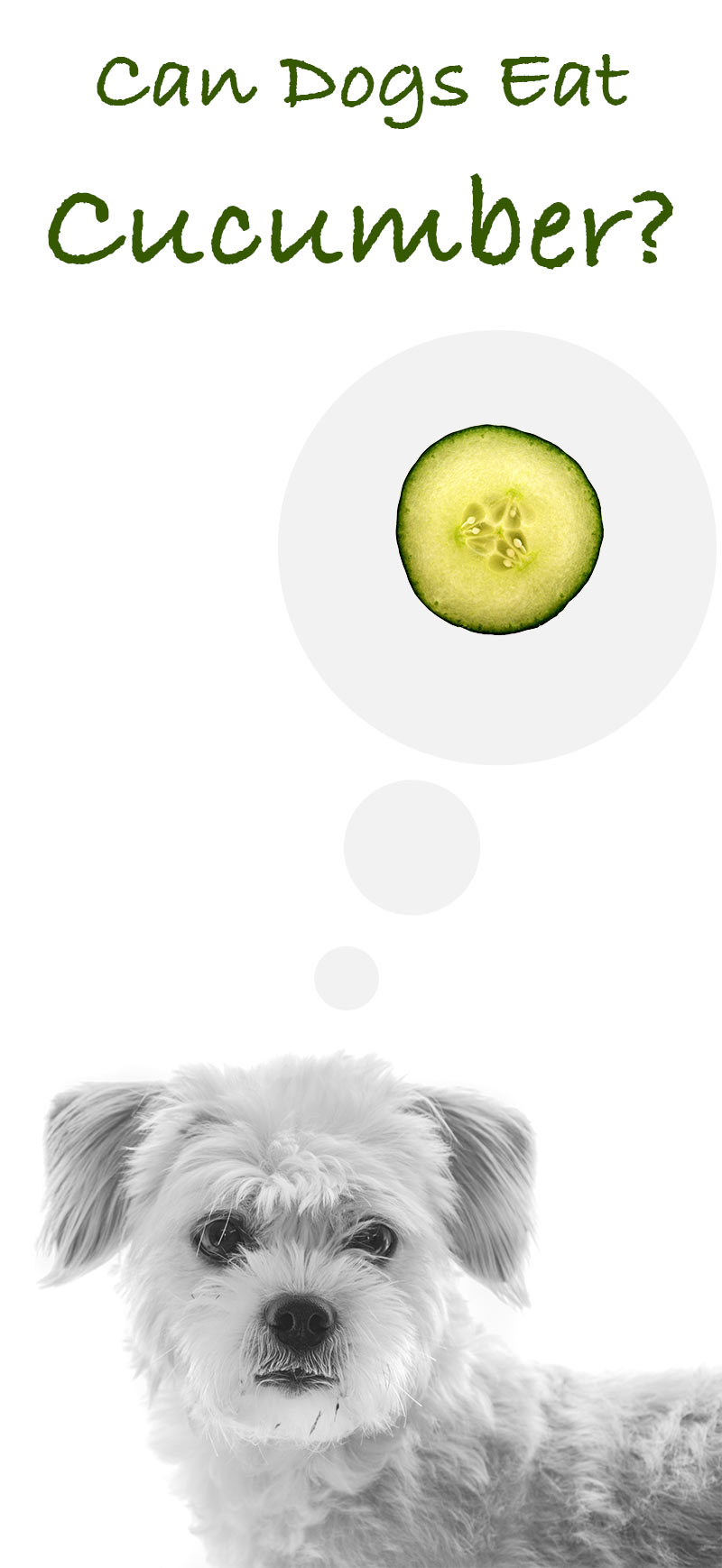 Can dogs have cucumber?