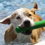Our Favorite Indestructible Dog Toys