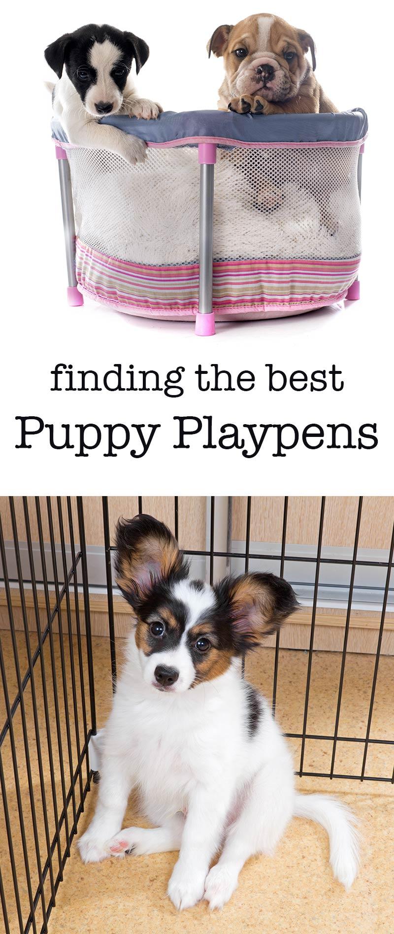 The Best Indoor Puppy Playpens