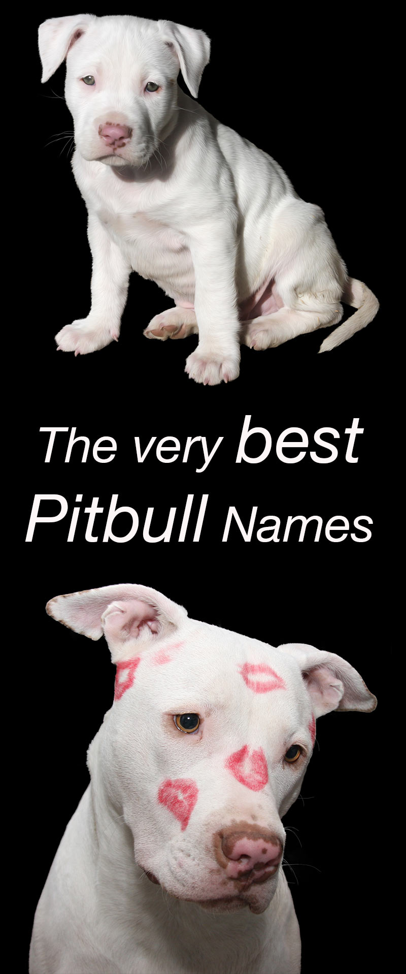 The Best Pitbull Names For Your New Puppy