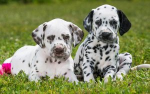 Best Outdoor Puppy Playpens