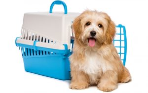 Best Puppy Crates – tips, reviews and how to choose