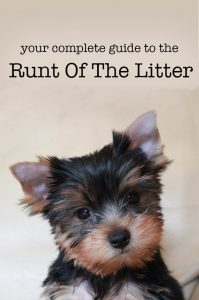 Runt Of The Litter – What to expect and how to care for runt puppies
