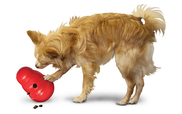 Best Kong Dog Toys