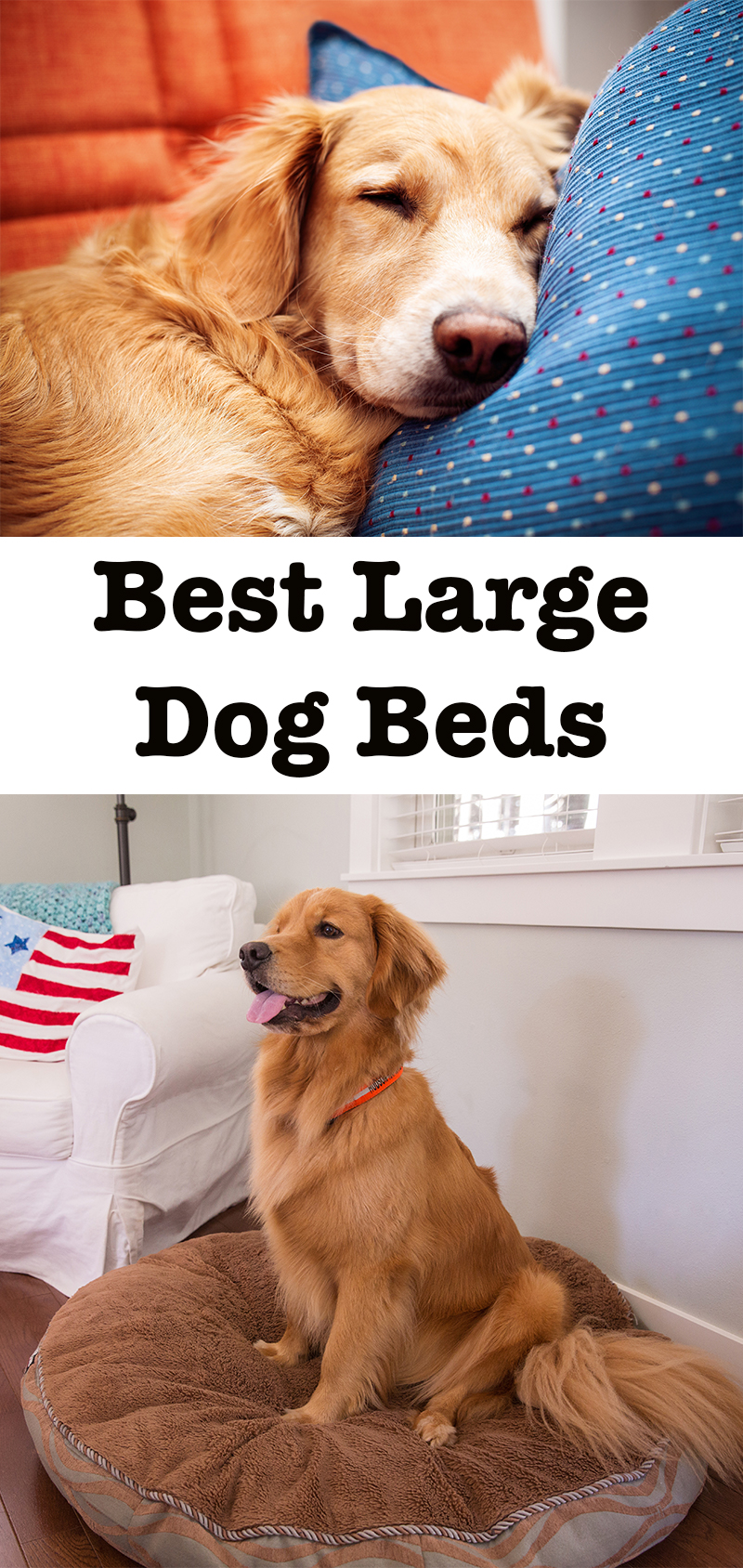 best large dog beds