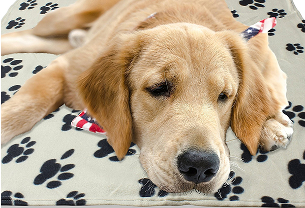 Best Dog Blankets Reviews And Tips For Making The Right