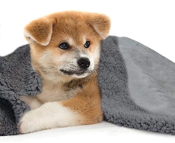 soft dog blankets