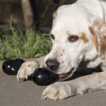 A Complete Guide To The Best Indestructible Dog Toys By