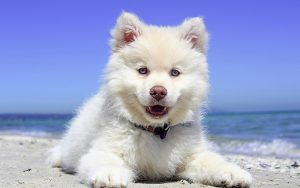 Male Dog Names – 200 Great Ideas For Boy Puppies