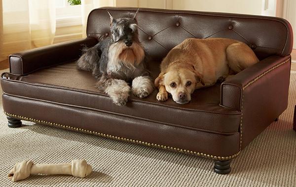the best large dog beds for big breeds or doggy families. Black Bedroom Furniture Sets. Home Design Ideas