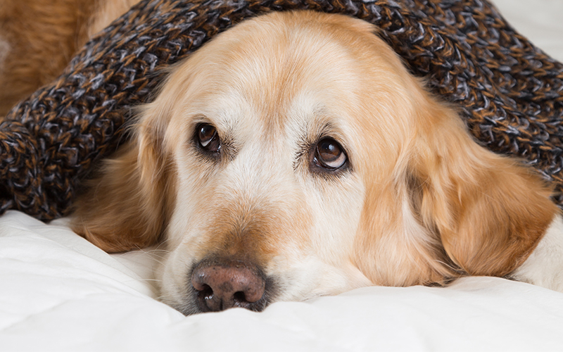 Best Big Dogs >> The Best Large Dog Beds For Big Breeds Or Doggy Families