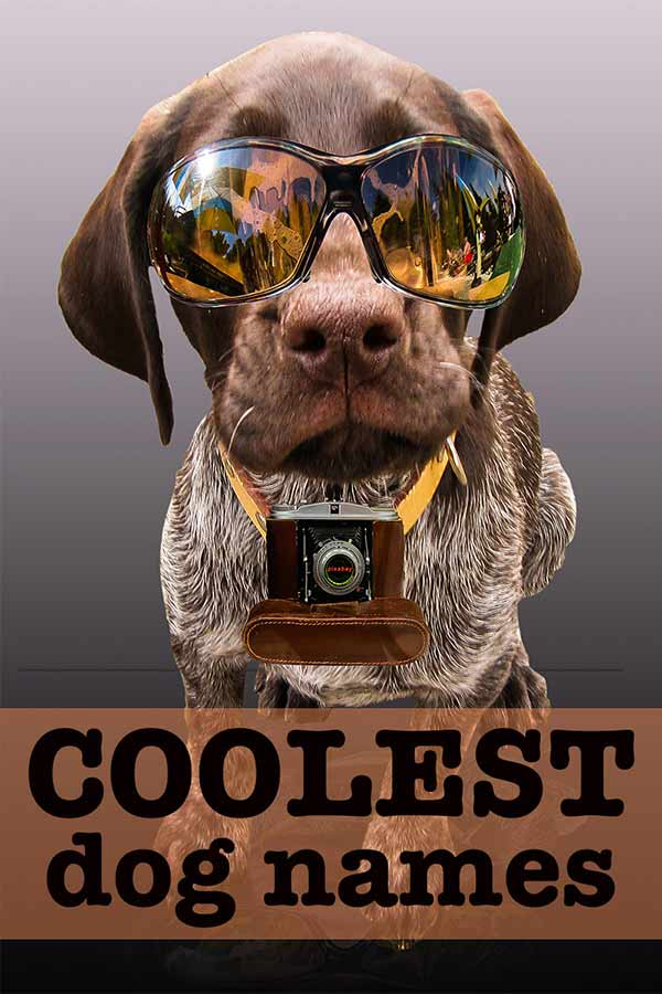 0000998b89abd 250 Cool Dog Names perfect for this German Shorthaired Pointer in shades