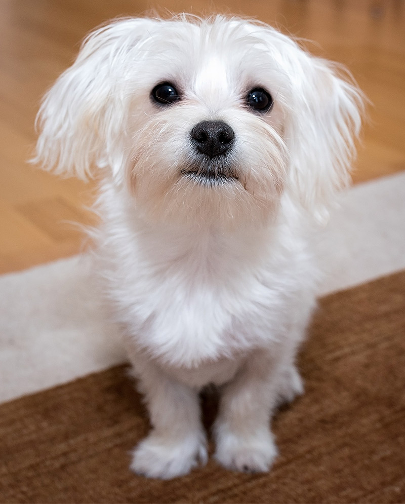 Best Cute Dog Names