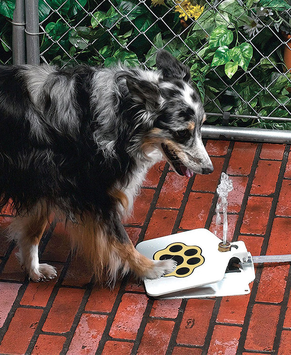 step on dog water fountain