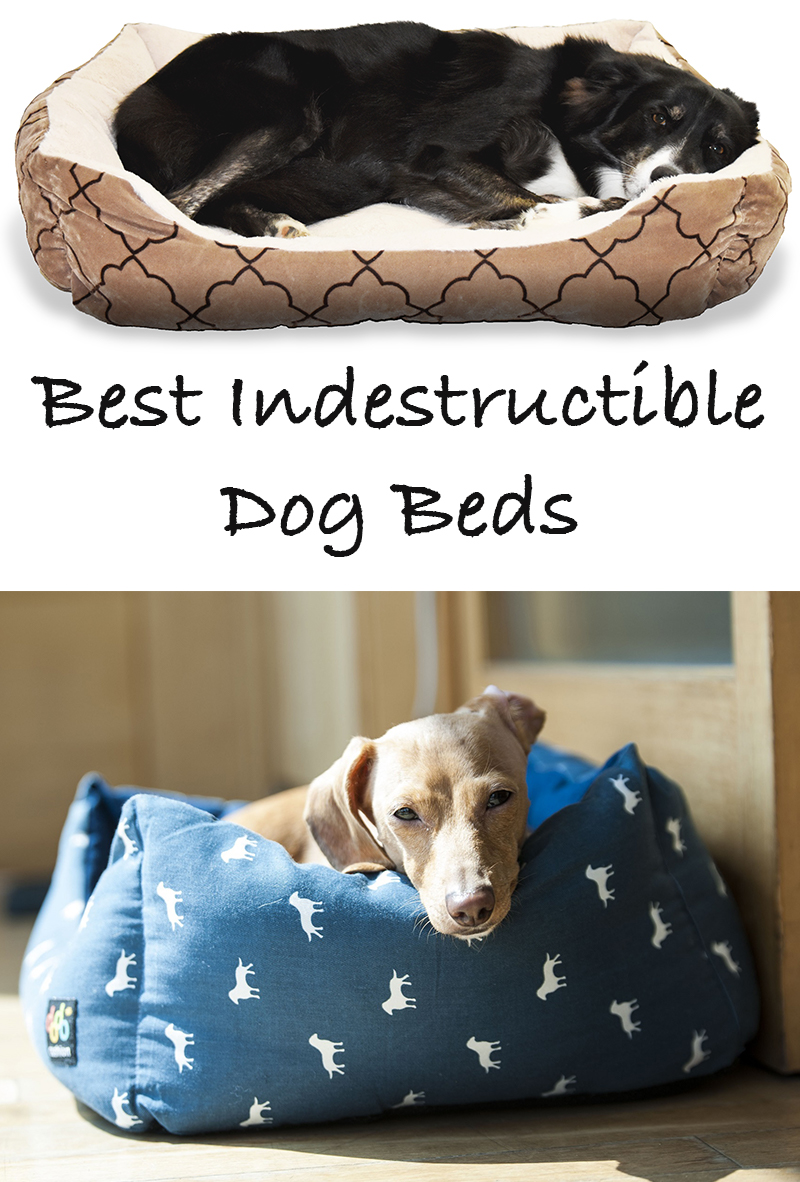 reviews of the best indestructible dog beds for extreme With non destructive dog bed