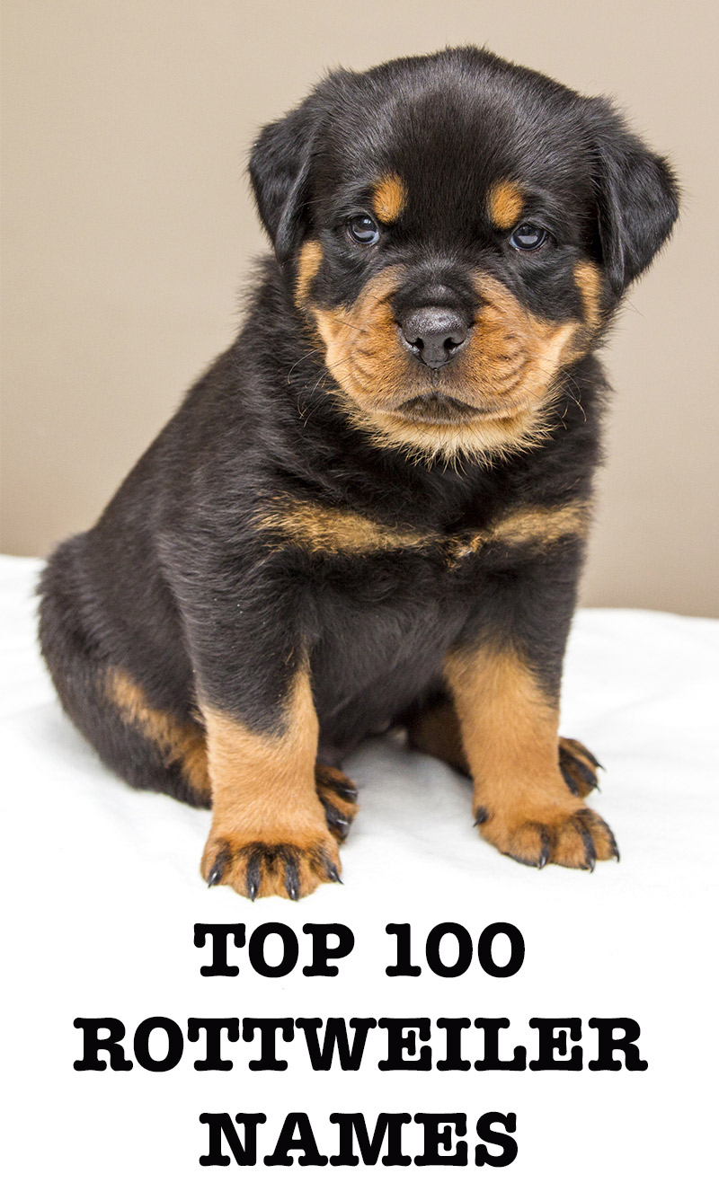 Top  Dogs In Uk