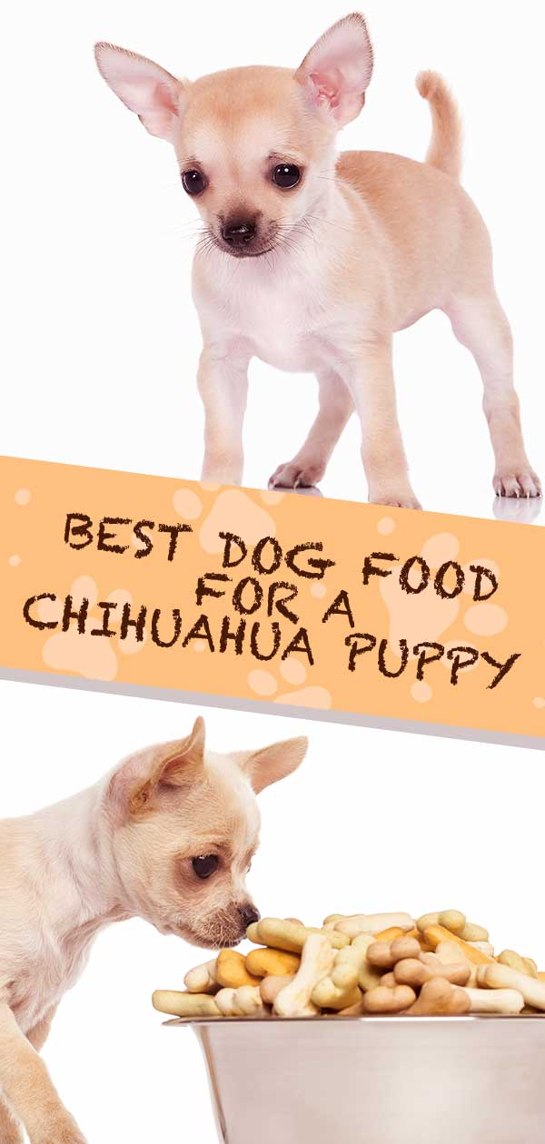 Best Food For Chihuahua Puppy - Tips and Reviews To Help You Choose
