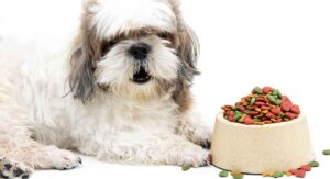 best food for shih tzu