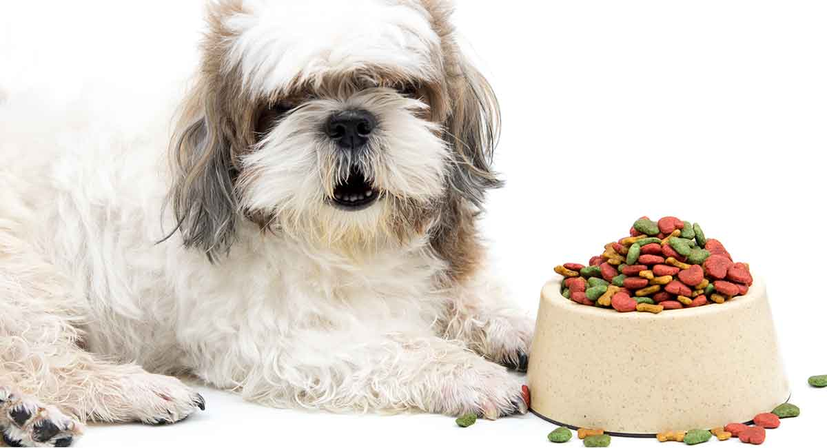 Best Dog Food For Shih Tzu Puppies Adults And Senior Dogs