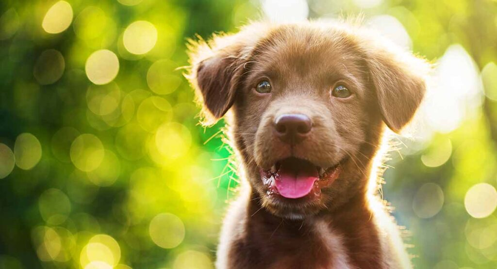Cute Dog Names - Over 200 Adorable Names for Boy and Girl Puppies