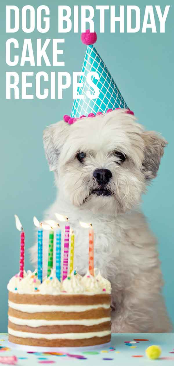 Dog Birthday Cake Recipes For Your Pups Special Day