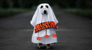 Best Dog Halloween Costume – Costumes For Small To Large Dogs