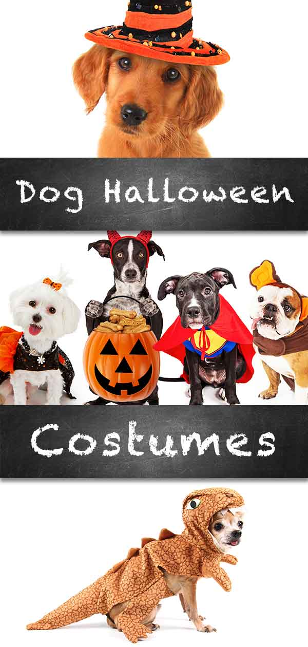 Best Dog Halloween Costume - Costumes For Small To Large Dogs