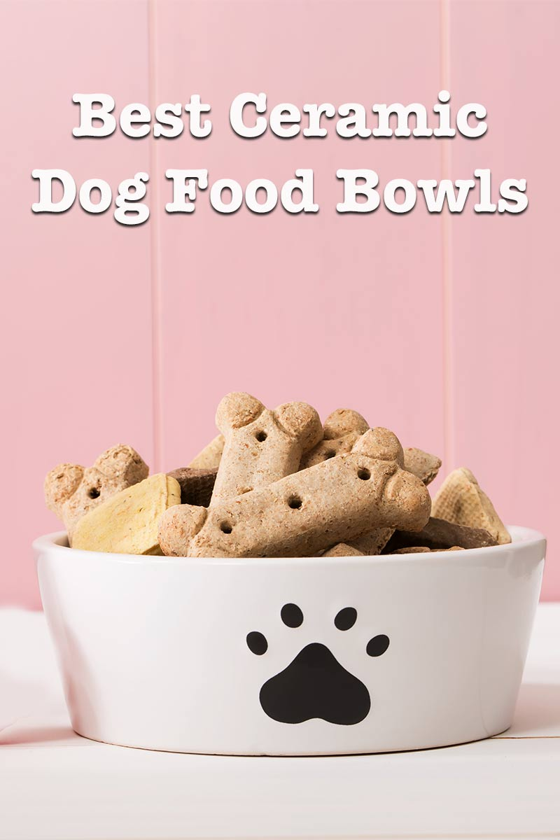 best ceramic dog bowls