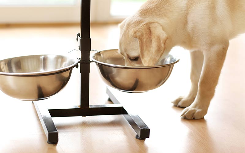best inexpensive dog food