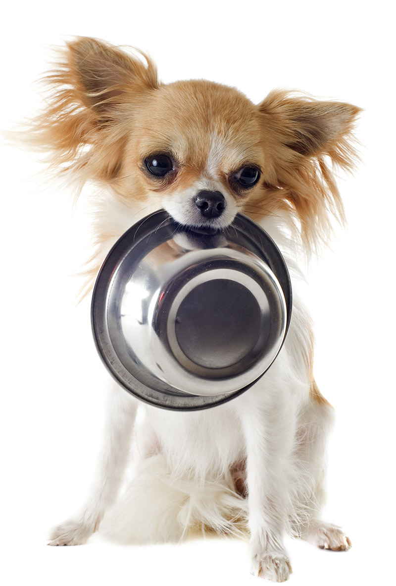 Best Dog Food For Chihuahua Puppy Tips And Reviews