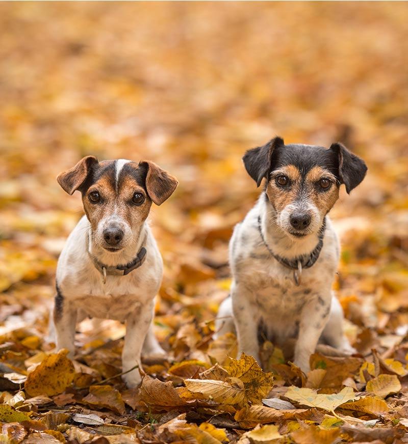 Best Dog Poop Bags With Handles