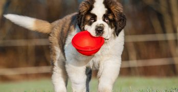 Best Large Breed Dog Food – From Puppies to Seniors
