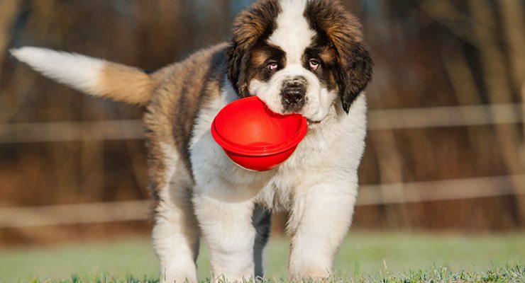Best Inexpensive Puppy Food For Large Breed