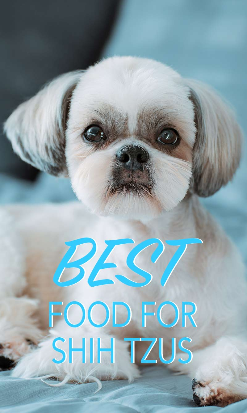 Best Dog Food For Shih Tzu Puppies To Adults And Seniors