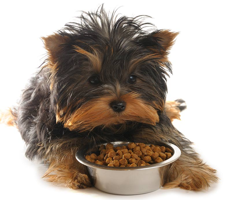 Best Food To Feed A Yorkie Puppy