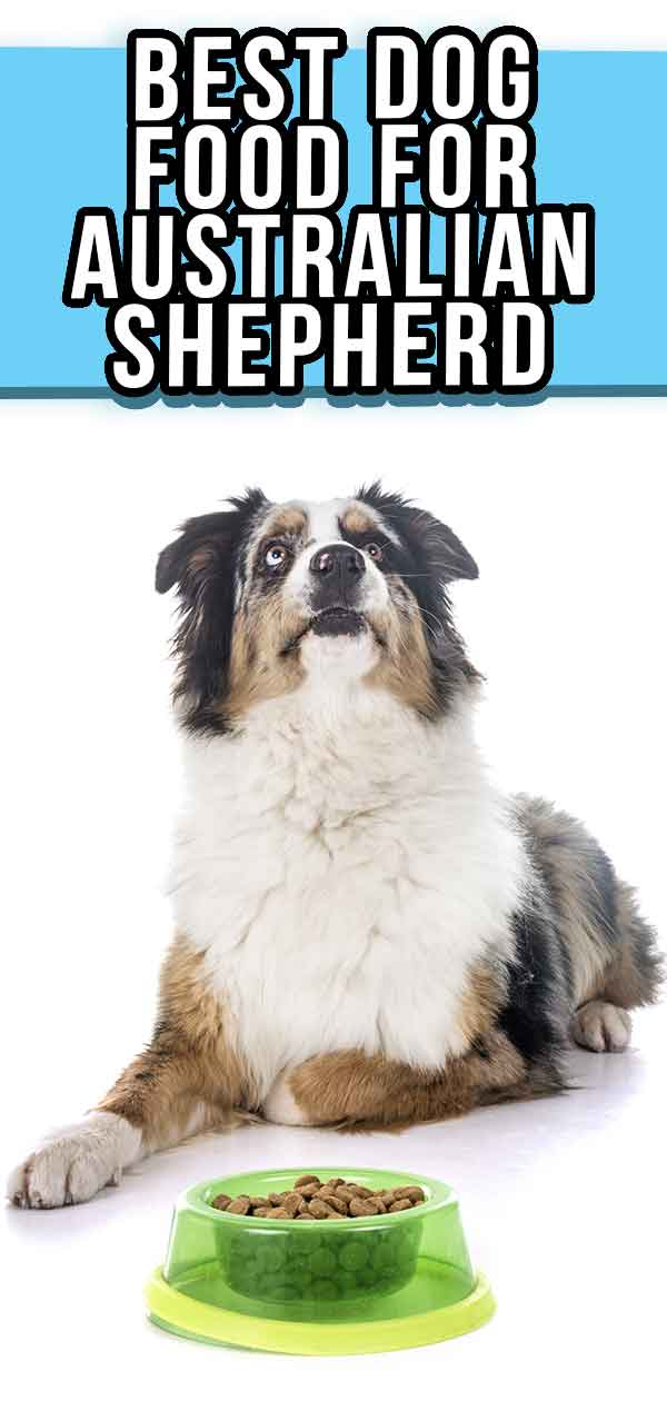 best food for australian shepherd