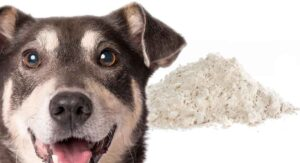 Diatomaceous Earth For Dogs; Is It A Safe Remedy For Fleas Or Worms?